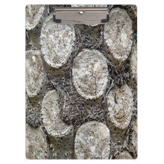 Tablero del árbol del helecho de plata