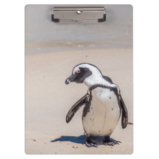 Tablero juguetón del pingüino carpeta de pinza