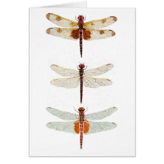 Tarjeta 3 especies Notecard de la libélula