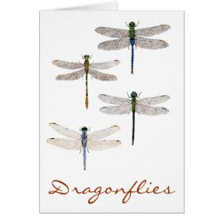 Tarjeta 4 especies de la libélula