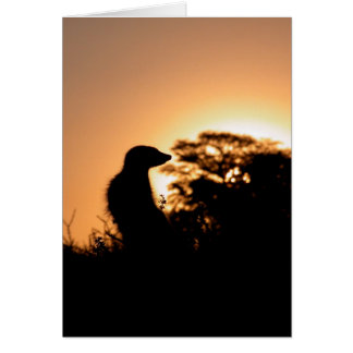 Tarjeta 5 de KMP - puesta del sol del Flav de
