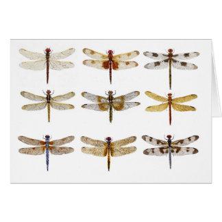 Tarjeta 9 especies de la libélula
