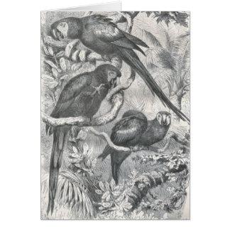 Tarjeta A.E. Brehm - Macaws
