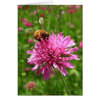 Tarjeta Abeja de la miel en la flor rosada