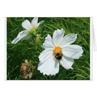 Tarjeta Abeja en la flor blanca