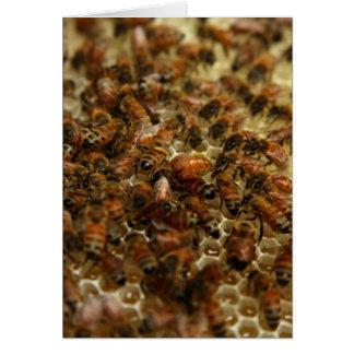 Tarjeta Abejas de la miel