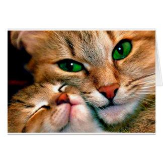 Tarjeta Abrazos del gato