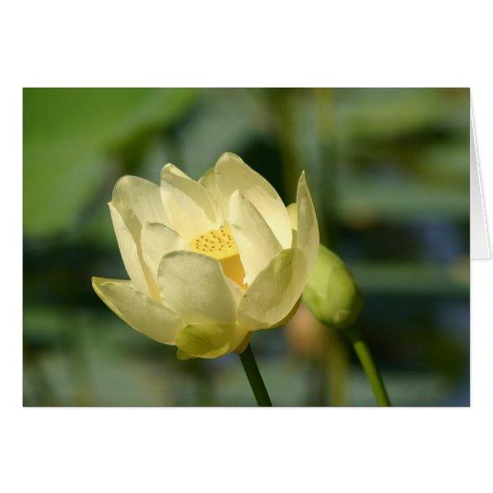 Tarjeta Agua Lilly Lotus