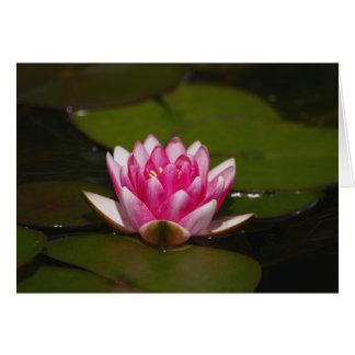 Tarjeta Agua lilly y cojines