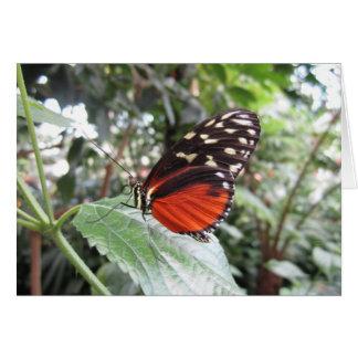 Tarjeta Alas de la mariposa