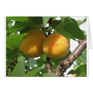 Tarjeta Albaricoques maduros que cuelgan en el árbol.