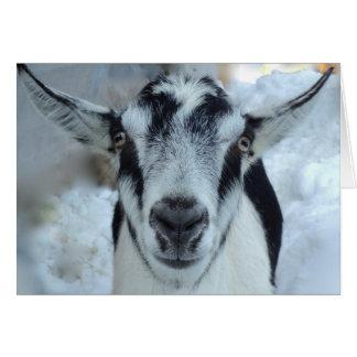 Tarjeta alpina de la cabra