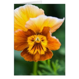 Tarjeta amarilla/anaranjada del pensamiento