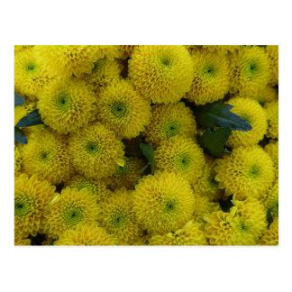 Tarjeta amarilla de los crisantemos