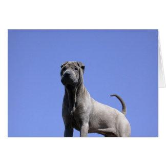 Tarjeta Ámeme, ame mi perro…
