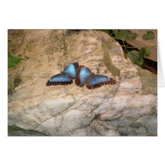 Tarjeta Amor de la mariposa