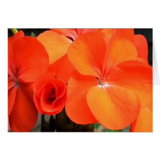 Tarjeta anaranjada de la foto de la flor del