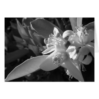 Tarjeta anaranjada del flor
