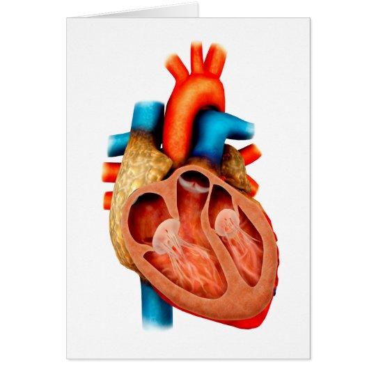 Tarjeta Anatomía del corazón humano, seccionada | Zazzle.es
