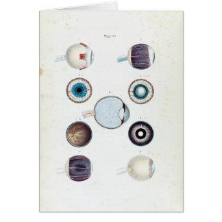 Tarjeta Anatomía del vintage del ojo humano