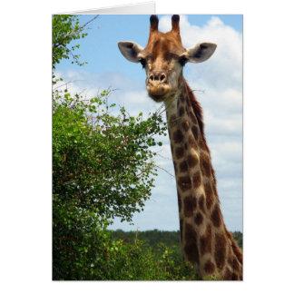 Tarjeta animal del safari de la jirafa