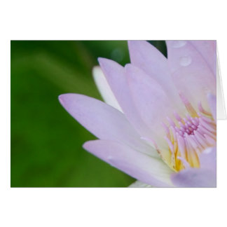 Tarjeta Apenas para usted/Lotus en fotografía