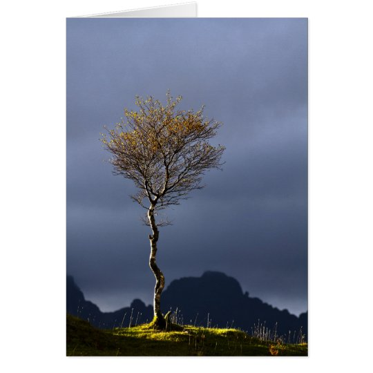 Tarjeta Árbol solitario cogido en Sun