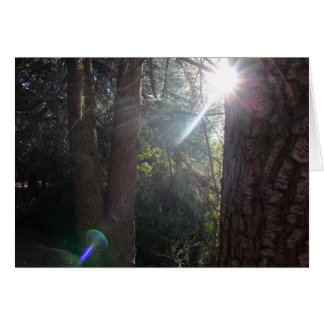 Tarjeta Árboles 2 del parque del barranco de Franklin