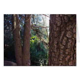 Tarjeta Árboles 3 del parque del barranco de Franklin