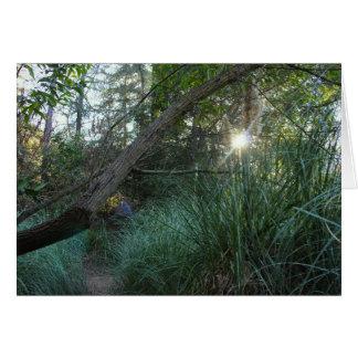 Tarjeta Árboles 4 del parque del barranco de Franklin