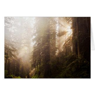 Tarjeta Árboles de la secoya en niebla de la mañana con