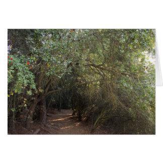 Tarjeta Árboles del parque del barranco de Franklin