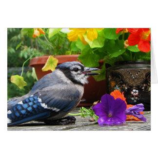 Tarjeta Arrendajo azul con las flores