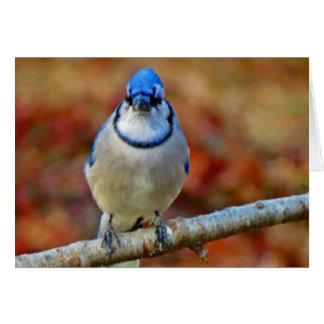 Tarjeta Arrendajo azul intenso - pájaro