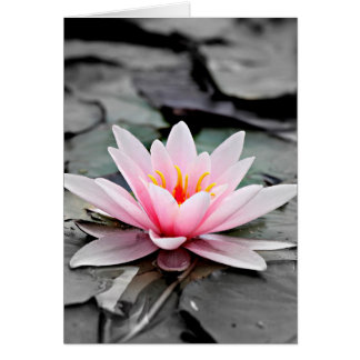 Tarjeta Arte rosado hermoso del zen de Waterlily de la
