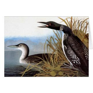 Tarjeta Audubon: Bribón común