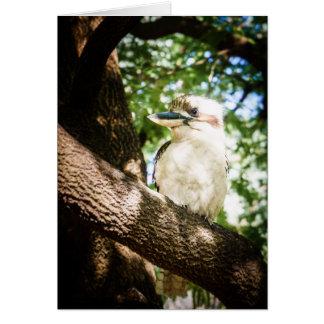Tarjeta Australia linda Kookaburra