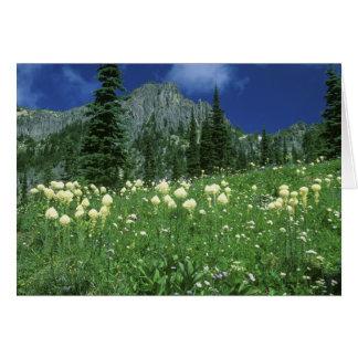 Tarjeta Beargrass en el lago eunice, el Monte Rainier NP,