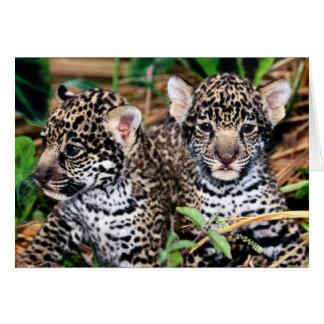 Tarjeta Bebé Jaguar Cubs