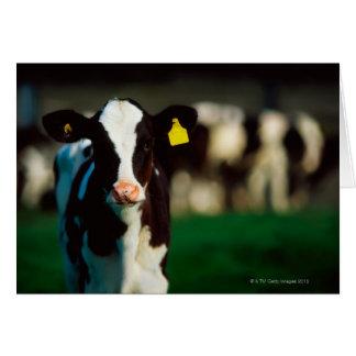 Tarjeta Becerro del Holstein-frisón