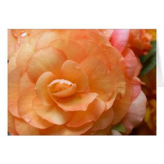 Tarjeta Begonia del melocotón