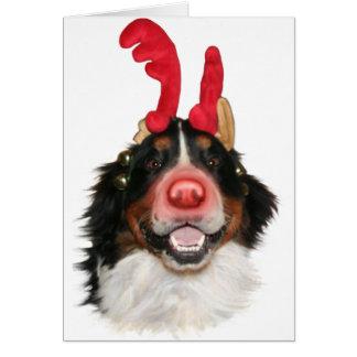 Tarjeta Bernese Roodolph (Rudolph)
