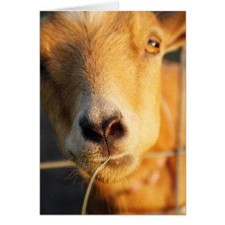 Tarjeta Besos de la cabra