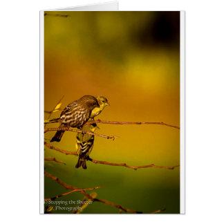 Tarjeta Birds of a Feather