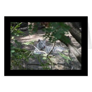 Tarjeta blanca del tigre