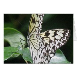 Tarjeta blanca y negra de la mariposa