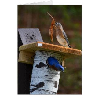 Tarjeta Bluebirds dulces de la jerarquización