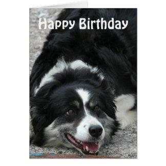 Tarjeta Border collie - feliz cumpleaños
