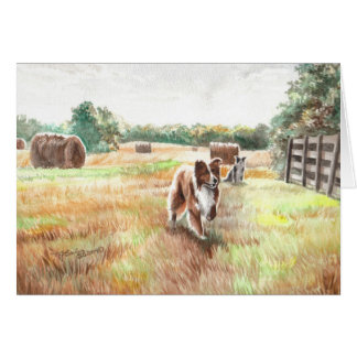 Tarjeta Borderes collies - perros de la granja