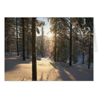 Tarjeta Bosque de Finnisch
